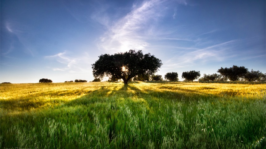 Landscape photography in Alentejo, depicting a lonely tree and inspired by the biocentrism concept, made by landscape photographer José Ramos from Portugal
