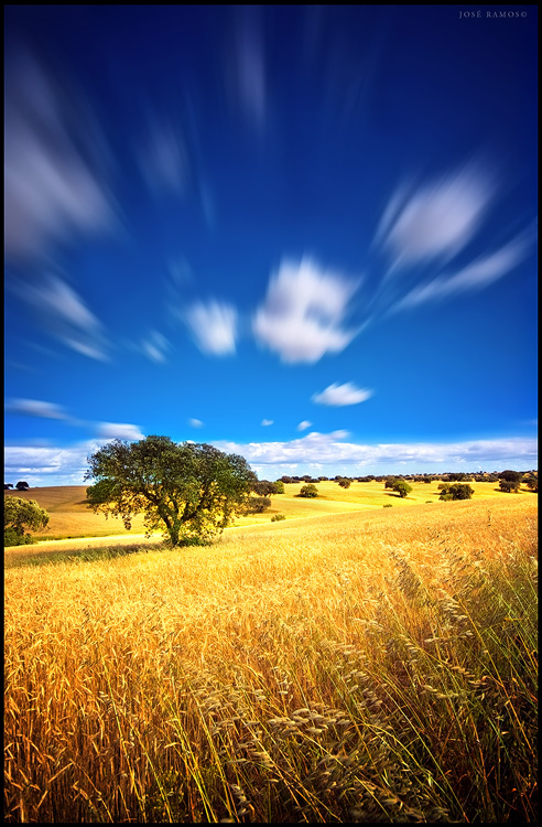 Landscape photography in Baixo Alentejo, depicting a tree amidst a wheat field, made by landscape photographer José Ramos from Portugal