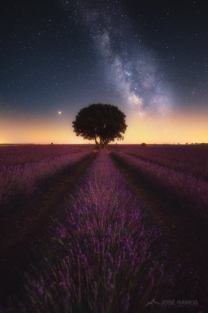 """The Tail of The Goddess"" - Brihuega Lavender Fields - Edited on BenQ SW240"