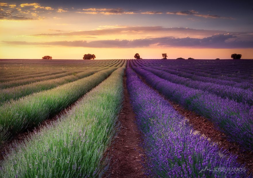 Landscape photography showing the Lavender Fields of Brihuega in Spain, captures by landscape photographer José Ramos