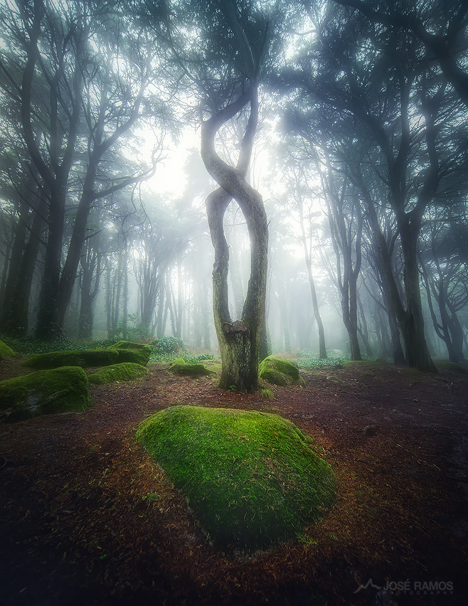 Landscape photo in the Sintra Forest in Portugal, during a misty afternoon, captured by landscape photographer José Ramos