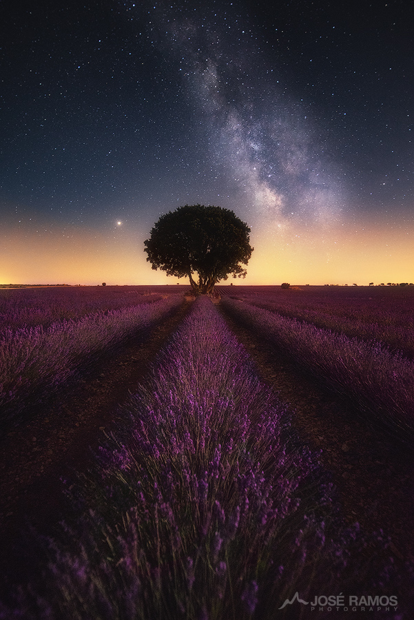 Night photography showing the lavender fields of Brihuega in Spain, with the Milky Way above them, shot by landscape photographer José Ramos
